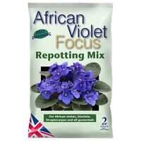 African Violet Focus Repotting Mix 2L - Compost for Gloxinia, Gesneriads
