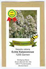 100 Samen Altai-Katzenminze Schizonepeta kokanica Minze Teepflanze