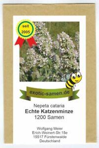 Katzenminze (Citralfrei - nur das mögen Katzen) - Nepeta cataria - 1200 Samen