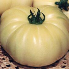 Rare Vegetable Seeds Tomato Belyy Gigant White Giant Beefsteak Heirloom