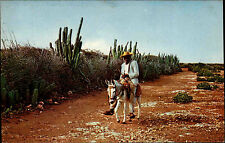 Curaçao Nederland Antilles ~1960/70 Typical Country Road Natives Mann auf Esel