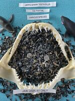 Lot Of (100) PARTIAL Fossilized Shark Teeth & BONUS Venice Fl.( OVER 3000 SOLD )