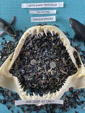 Lot Of (100) Partial Fossilized Shark Teeth & Bonus Venice Fl.( Over 3000 Sold )