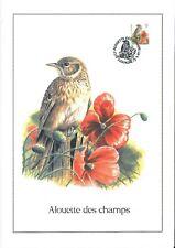 FDC 2705 - Oiseau Buzin sur gravure format A4 !