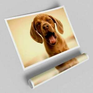 Funny Dog Wild Life Posters 12027 Print Poster
