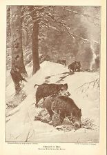 Hogs, Wild Boars, Rooting In The Snow, Vintage 1892 German Antique Art Print