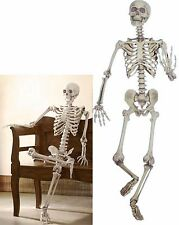 Realistic LIFE-SIZED Posable Skeleton 5ft Halloween In OR Out door Yard Prop