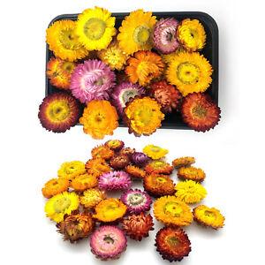 Strohblumen Getrocknete Blumen Landhaus Deko Dekoration Blüten Kranz Echte Blume