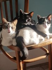 Cats Protection Carmarthenshire - Please help neuter feral cats