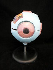 Eye Model-AN040-0004