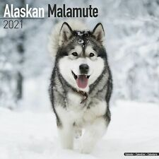Alaskan Malamute Calendar 2021 Premium Dog Breed Calendars