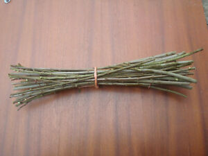 25 X Goat Willow Cuttings Live, Fast growing 30cm