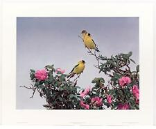 Vintage TERRY ISSAC Birds Animals Goldfinch American Lithograph SIGNED #134T