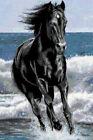 ESQUEMA PARA PUNTO DE CRUZ GRAFICO CABALLO NEGRO HORSE CROSS STITCH PATTERN DMC