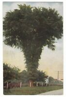 1911 ROCHESTER NY LATTA ELM YATES FARM VINTAGE POSTCARD NEW YORK SIBLEY CURR OLD