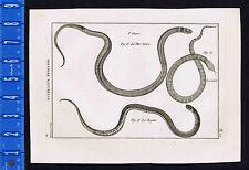 Snakes-King-Black Headed-Cobel 1789 Bonnaterre Engraving
