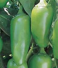 Pepper Seed, Early Jalapeno Chille, Heirloom, Organic, Nongmo, 100 Seeds, Chille