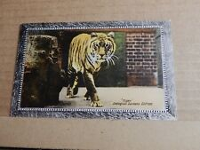 Postcard  Tiger At Zoological Gardens Clifton Early Colour  Unposted