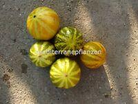 ungarische Sonnenmelone, extra süss, 90 Tage,10 Samen,samenfest von unserer Farm