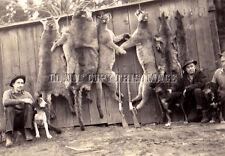 Repro 8X10 Photo Hunters Rifles Cougar Puma, Dogs, Hound, 7 Mountain Lions