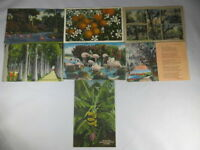 Lot of 7 Mixed Florida Linen Postcards 1930's to 1950's  #008