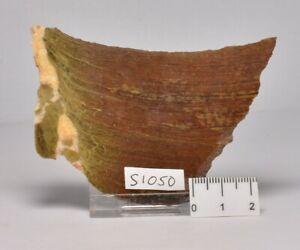 STROMATOLITE Platella cf. anasata, Paleoproterozoic, CANADA, (S1050)