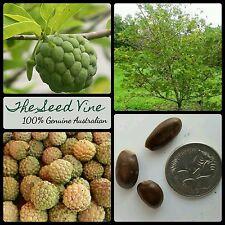 5 SUGAR APPLE SEEDS (Annona squamosa) Custard Apple Tree Fruit Edible