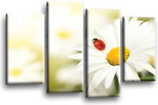Floral Flor LONA pared arte Foto impresión Amarillo Blanco Panel de división de Margarita