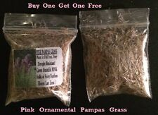 Buy 1 Get 1 Free Pink Ornamental Pampas Grass Way Over 250 + Seeds 4 U