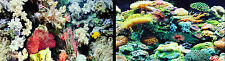 """Aquarium Fish Tank Background by the foot 12""""tall, Two-sided. WORLDWIDE SHIPPING"""