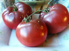 Black Krim / Noire de Crimée / Crimean Black Heirloom Tomato : 25 Seeds
