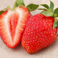 Bulk Seed 200 Giant Strawberry Seeds Edible For Garden Home Fruits Seeds S066