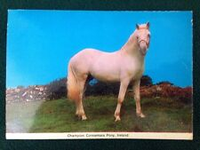 Postcard Champion Connemara Pony Ireland Cardall Ltd 345