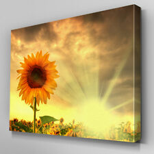 FL477 Sunflower Sunset Floral Canvas Wall Art Ready to Hang Picture Print