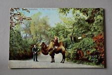 R&L Postcard: London Zoo Zoological Gardens Camel Ride & Zookeeper, EFA 1905