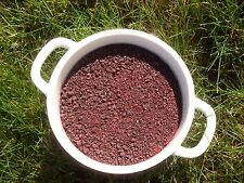 Black currant Ribes nigrum 1LB (453gram) Organic dried fruits powder 2018!!!