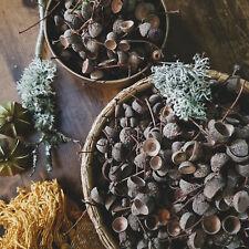 100 Natural Acorn Cups   Craft • Centrepiece • Autumn Decor • Rustic • Wreaths