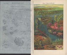 Chromo-Lithografie 1924: Algen des Meeres. Wasser-Pflanzen Blüten Tiere Ozean