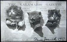 KALAMAZOO MI~ 1906 NEWSPAPER ~ THE KALAMAZOO GAZETTE ~ THREE KITTENS ~ RPPC