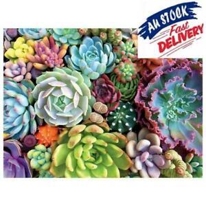 1000 Piece Succulent Spectrum Plants Puzzle Adult Children Holiday NEW Q6K 2K0