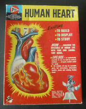 1:1  Scale Model Kit of the Human Heart