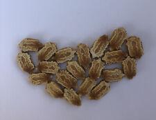 20 BitterMelon Seeds Fresh Harvested U.S. Seller