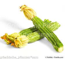 Zucchini CASERTA * zartes Gemüse * 6 Samen * Kürbis * gestreift * SEHR SELTEN