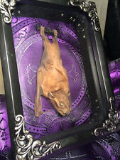 Real Taxidermy Bat, Filigree Frame Accents, Purple Brocade Fabric backing