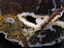 RimRock: Rare TOM MINER BASIN PETRIFIED WOOD Rough Slab
