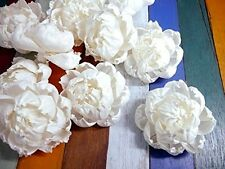 9 Peony Roses White Balsa Wood Sola Diffuser Flowers 8 cm Dia.