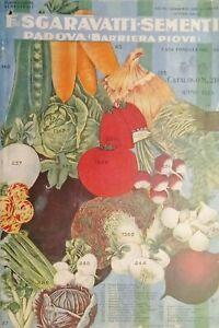 Catalogo Sgaravatti Sementi Padova ( Barriera Piove ) N. 210 - 1929