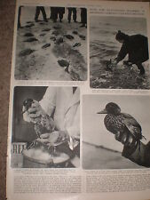 Photo article Germany Rei detergent for cleaning oil from sea birds 1955 rf Z