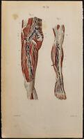 1846 - Planche anatomie Angiologie : Vaisseaux et ganglions de la jambe