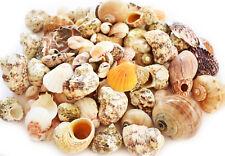 2 lbs Landscaping / Gardening Shell Mix Seashells Beach Cottage Nautical Bulk